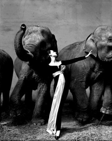 Richard Avedon, Dovima with Elephants, Cirque d'Hiver, Paris 1953